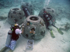 Planting Corals on a Reef Ball